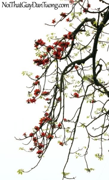 Tranh dán tường , ngắm cánh hoa cây gạo DA0584