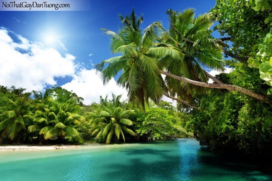 Tranh dán tường , ngắm cảnh những hàng cây dừa xanh và con suồi nhỏ DA0577