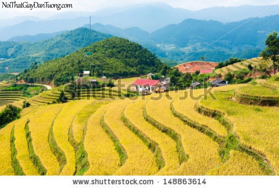 Tranh dán tường , cánh đồng ruộng bậc thang đồi núi hùng vĩ DA0597