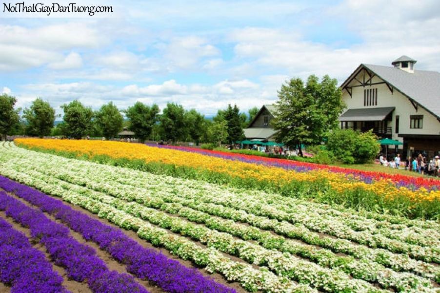 Tranh dán tường , cảnh vườn hoa muồn màu sắc tươi đẹp DA0601