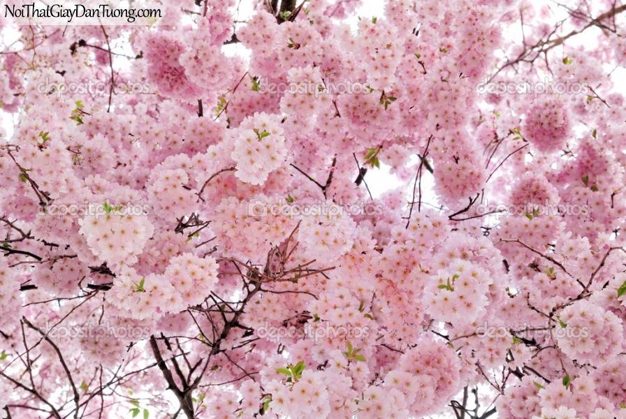 Tranh dán tường , ngắm cánh hoa tuyệt đẹp màu hồng nhạt DA0606