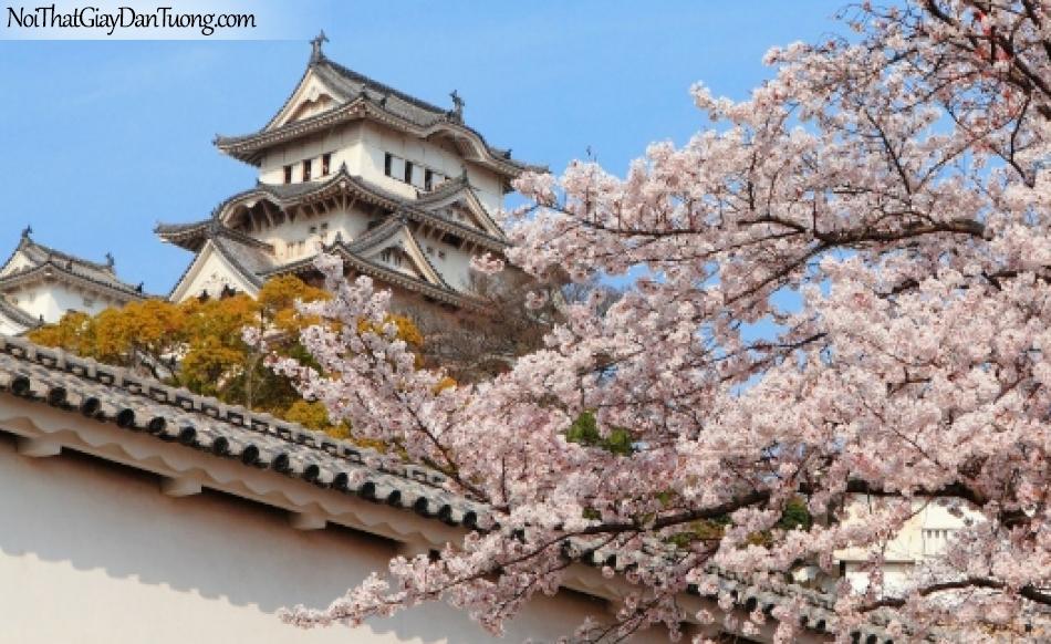 Tranh dán tường , ngôi nhà và cánh cây hoa anh đào DA0623