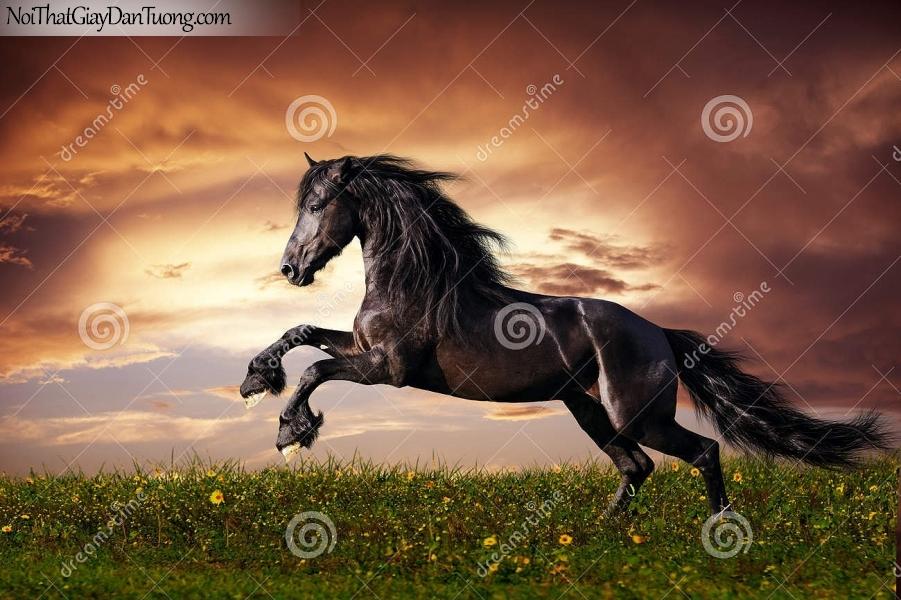 Tranh dán tường | chú ngựa phi vó đá của mình dưới bầu trời hoàng hôn DA013