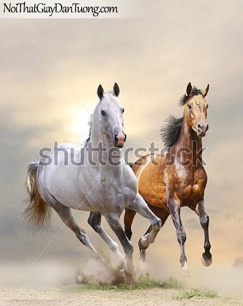 Tranh dán tường | những chú ngựa đang đua tài cùng nhau DA017