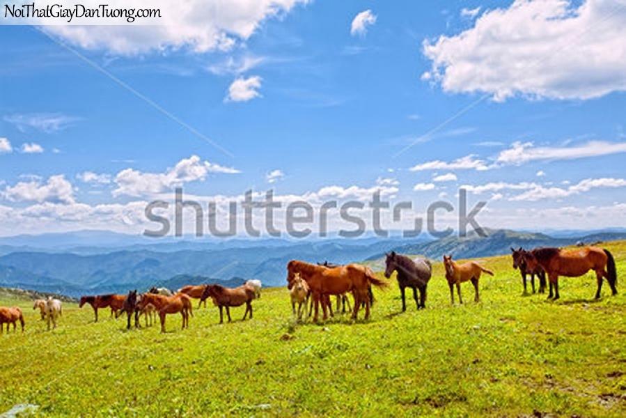 Tranh dán tường   những chú ngựa trên thảo nguyên DA006