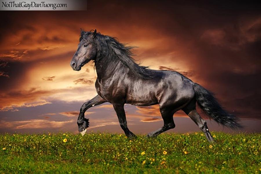 Tranh dán tường | sự uy nghi dũng mãnh của chú ngựa trên thảo nguyên và bầu trời DA015