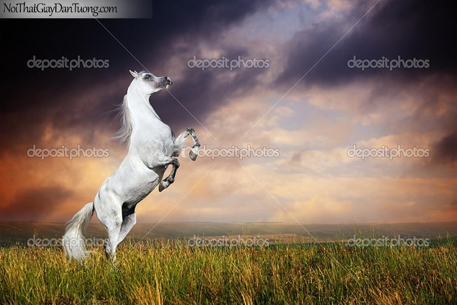 Tranh dán tường | bức tranh chú ngựa hí vang trời giữa thảo nguyên DA024