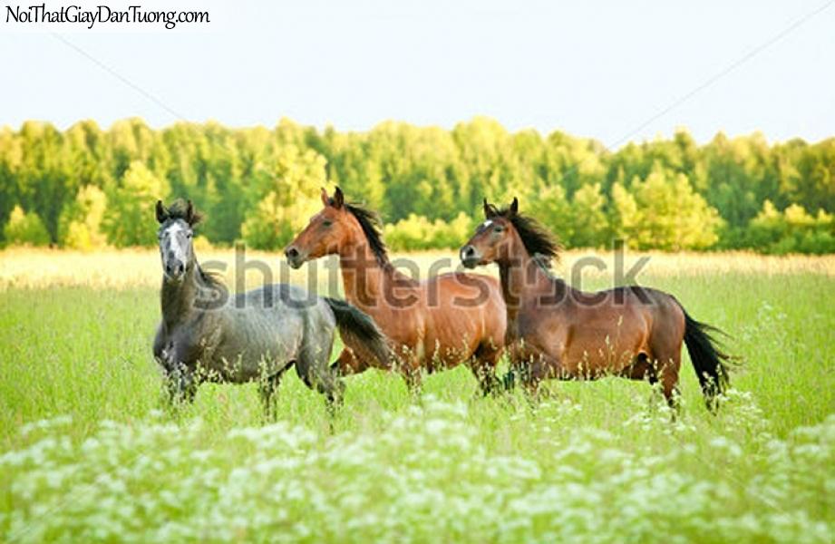 Tranh dán tường | bức tranh 3 chú ngựa trên thảo nguyên cỏ xanh DA040