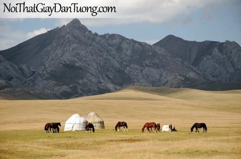 Tranh dán tường   những chú ngựa đang ăn cỏ trên thảo nguyên