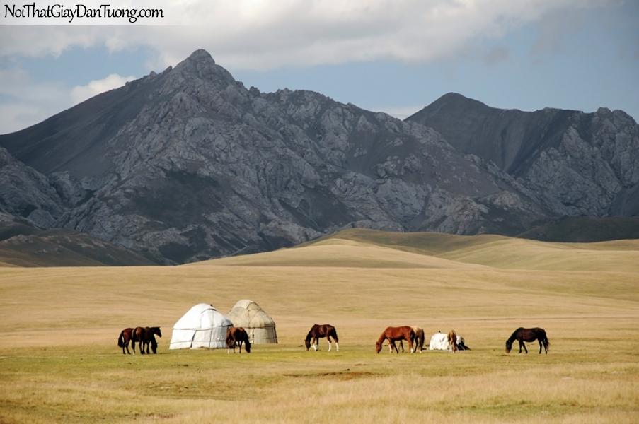 Tranh dán tường | những chú ngựa đang ăn cỏ trên thảo nguyên