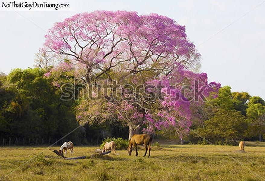 Tranh dán tường | bức tranh những chú ngựa ăn cỏ trên thảo nguyên xanh DA043