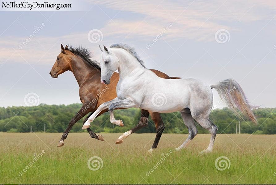 Tranh dán tường | Bức tranh 2 chú ngựa chạy trên thảo nguyên DA071