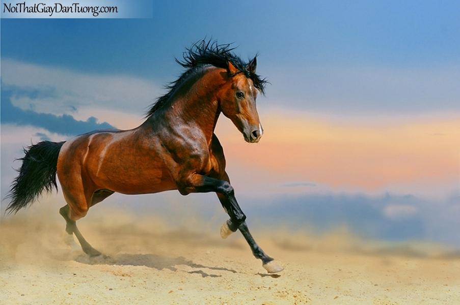 Tranh dán tường | Bức tranh chú ngựa dũng mãnh trên sa mạc rộng lớn DA058