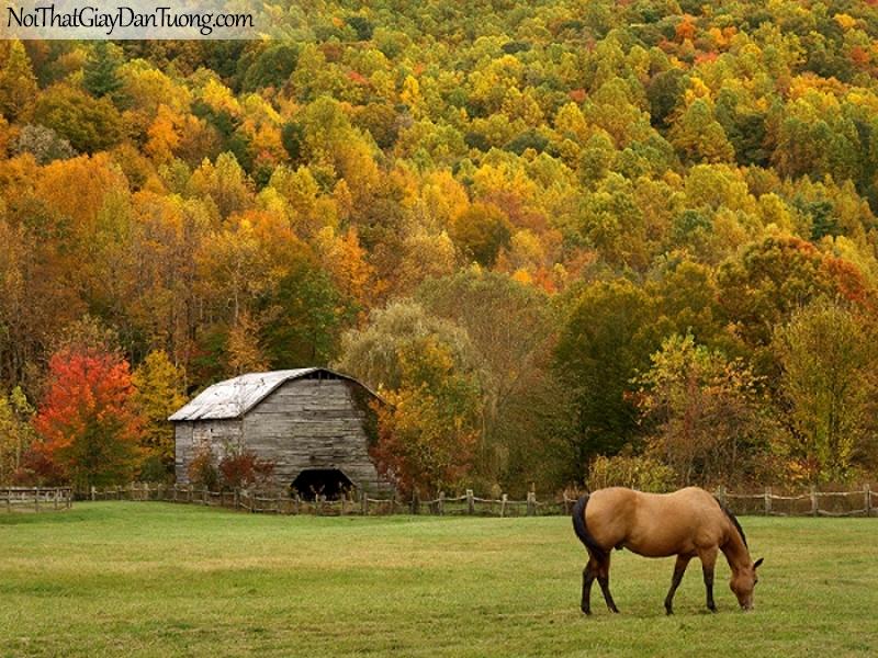 Tranh dán tường | Bức tranh chú ngựa ở trong trại chăn ngựa với khu rừng mùa thu DA078