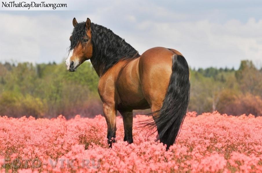 Tranh dán tường | bức tranh chú ngựa trên thảo nguyên nhiều hoa DA059