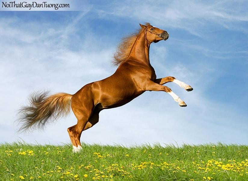 Tranh dán tường | Bức tranh chú ngựa tung vó đá của mình trên thảo nguyên DA079