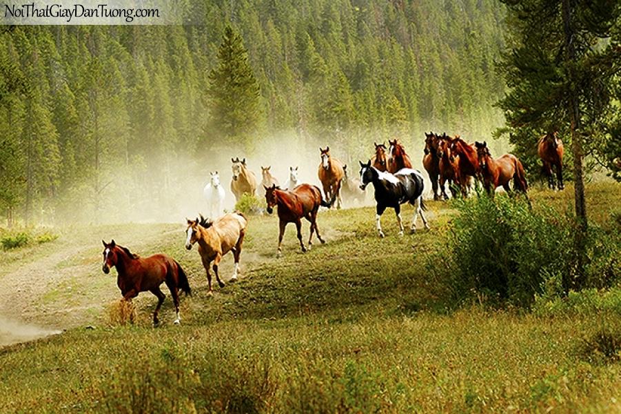 Tranh dán tường | Bức tranh đàn ngựa trên thảo nguyên DA076
