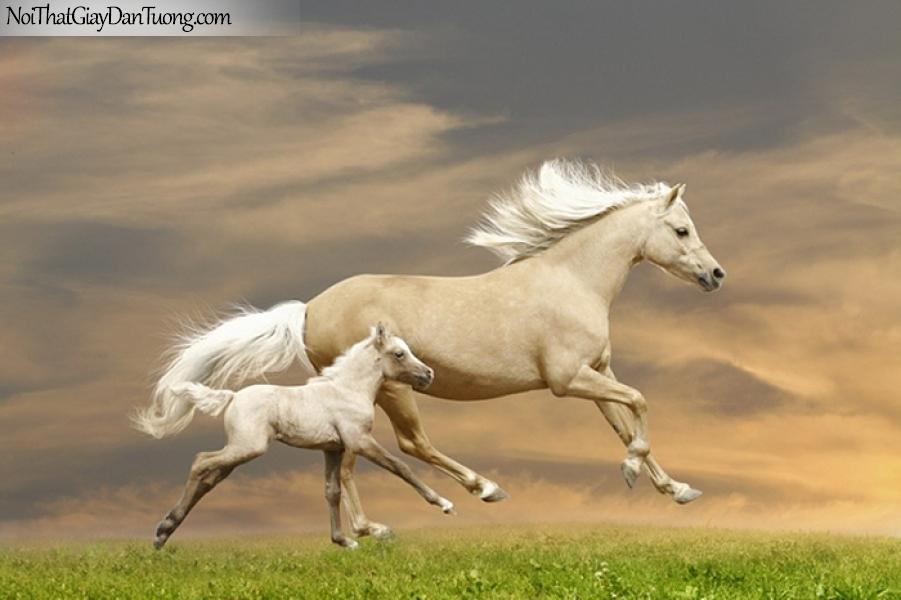 Tranh dán tường | Bức tranh ngựa mẹ cùng ngựa con chạy trên thảo nguyên rộng lớn DA064