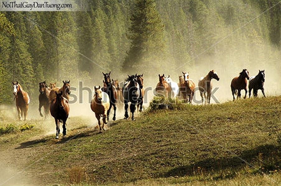 Tranh dán tường | Bức tranh những chú ngựa chay ra từ rừng thông DA074
