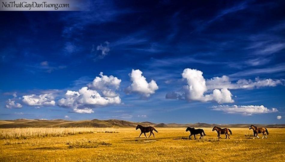 Tranh dán tường | những chú ngựa chạy trên thảo nguyên bao la DA068