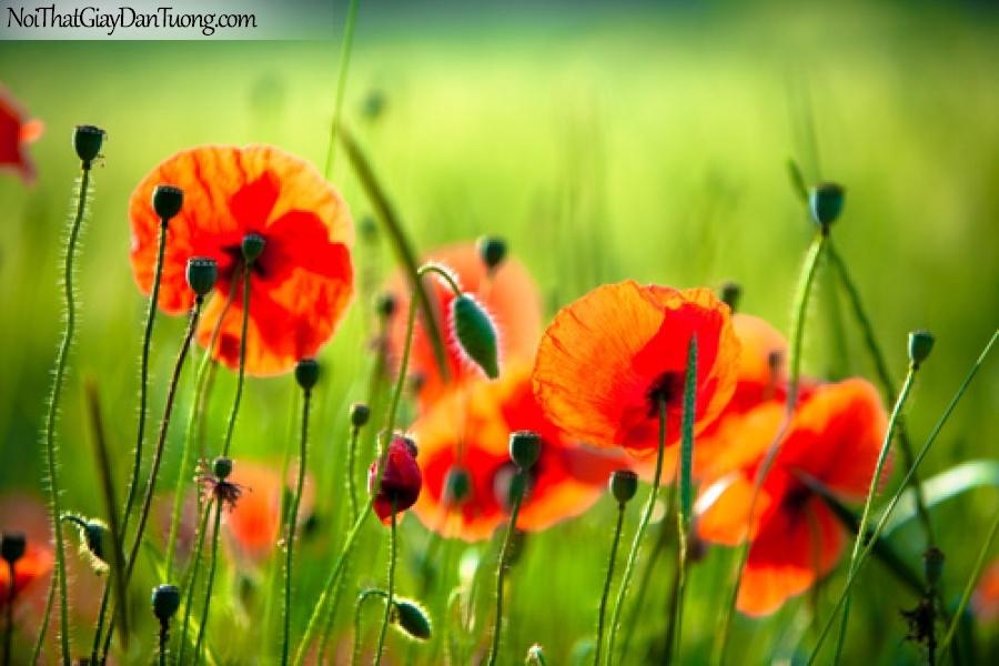 Tranh dán tường | Bức tranh cận cảnh những bông hoa đang khoe sắc DA2118