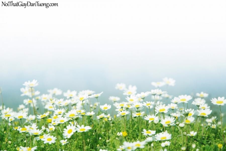 Tranh dán tường | bức tranh những bông hoa cúc đang khoe sắc DA2119