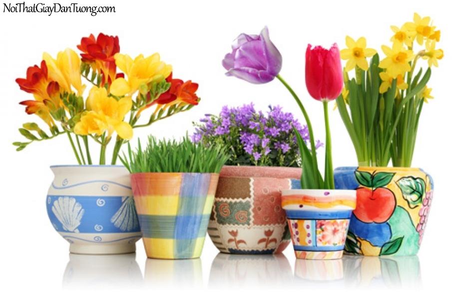 Tranh dán tường | Bức tranh những bông hoa được chăm sóc trong những chậu hoa xinh xắn DA2121