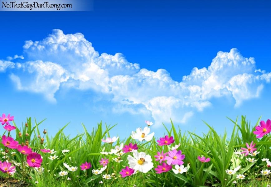 Tranh dán tường | bức tranh những bông hoa dưới bầu trời mây xanh DA2105