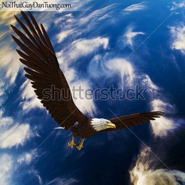 Tranh dán tường , chim đại bàng bay cao trên bầu trời DA310