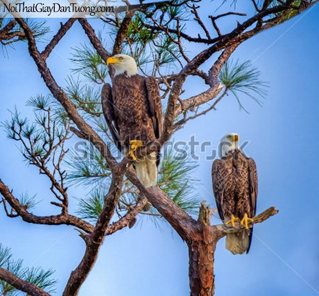 Tranh dán tường , ngắm 2 chú chim đàng đừng tren cánh cây DA322