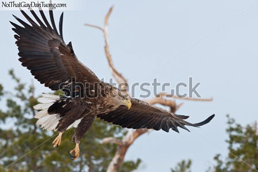 Tranh dán tường , ngắm chim đại bàng đàng lượn DA332