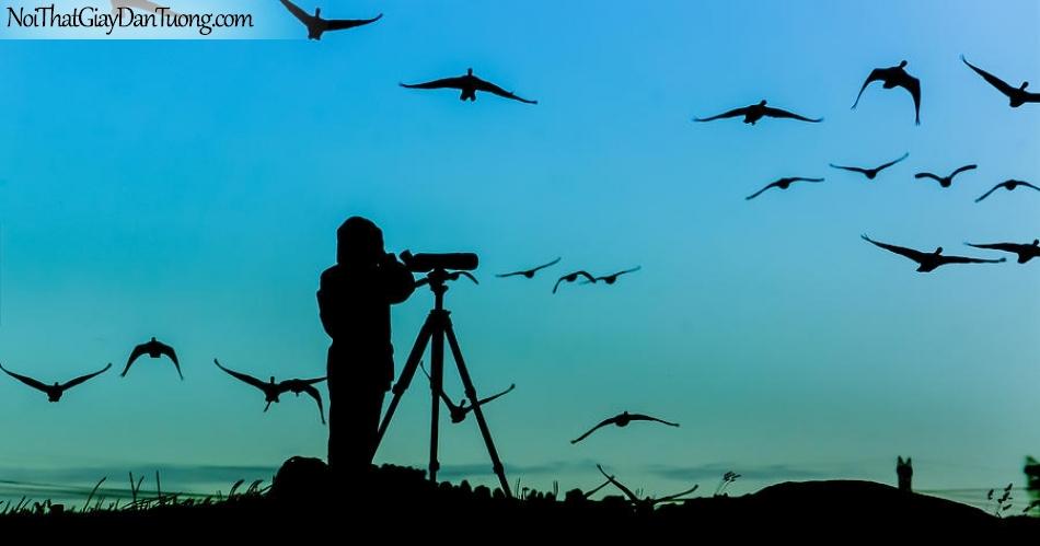 Tranh dán tường , ngắm đàn chim bay DA306