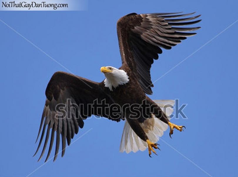Tranh dán tường , nhìn chim đại bàng bay như tiên lửa DA315