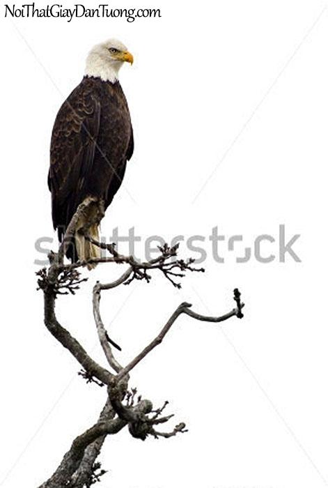 Tranh dán tường , nhìn chú chim đại bàng DA319
