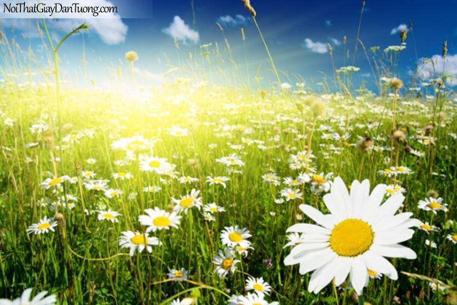 Tranh dán tường | những bông hoa chào đón ánh mặt trời DA2095