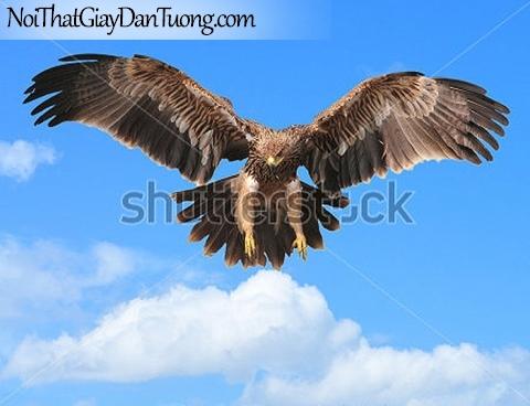 Tranh dán tường , chim đại bàng bay DA340