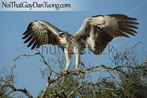 Tranh dán tường , chim đại bàng đậu trên cánh cây DA346