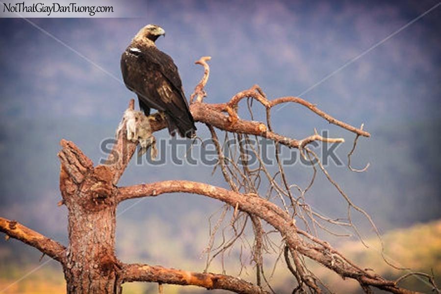 Tranh dán tường , chim đại bàng đậu trên cánh cây kho DA349
