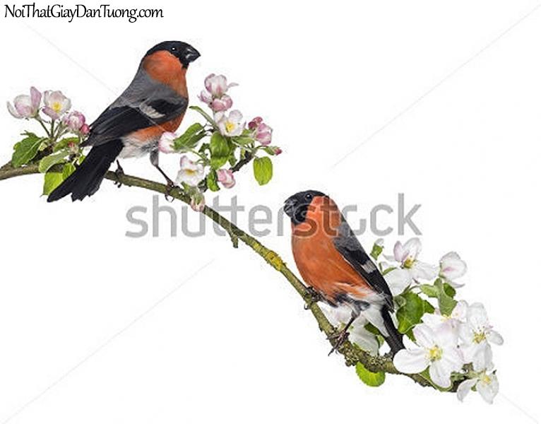 Tranh dán tường , đôi chim đậu trên cánh cây tuyệt đẹp DA347