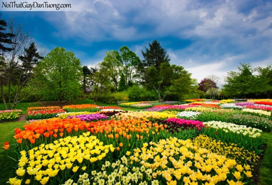Tranh dán tường | những bông hoa xếp xinh xắn đua nhau khoe sắc trong khu rừng xanh DA2128