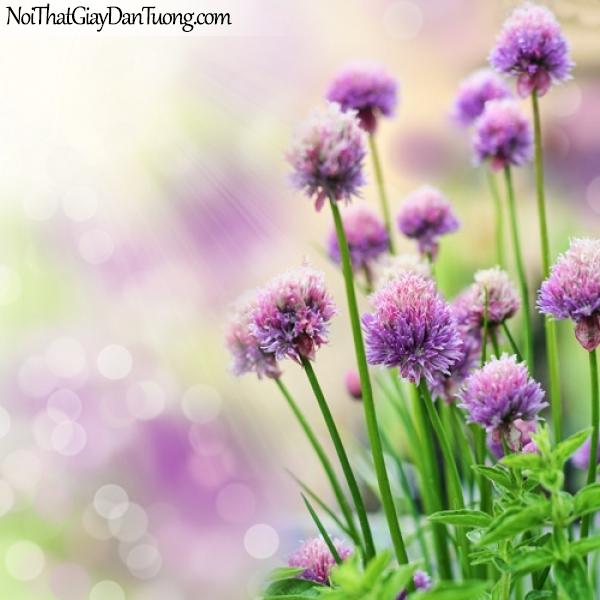 Tranh dán tường | những bông hoa xinh tươi đang khoe sắc dưới ánh mặt trời DA2134