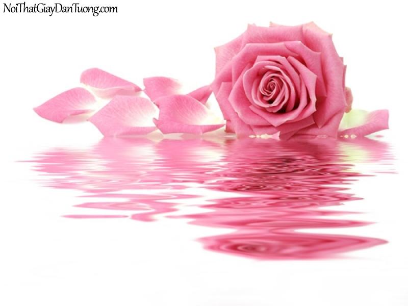 Tranh dán tường | Bức tranh bông hoa hồng đang khoe sắc trên mặt nước DA2166