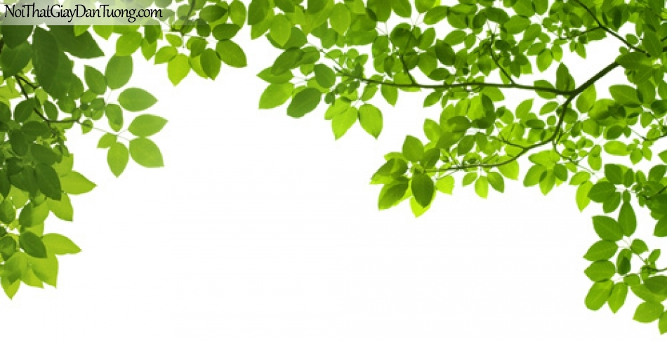 Tranh dán tường | Bức tranh những nhành lá cây xanh che khuất bầu trời DA2150