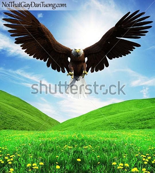 Tranh dán tường , ngắm chim đại bàng hạ cánh trên cánh đồng hoa DA361