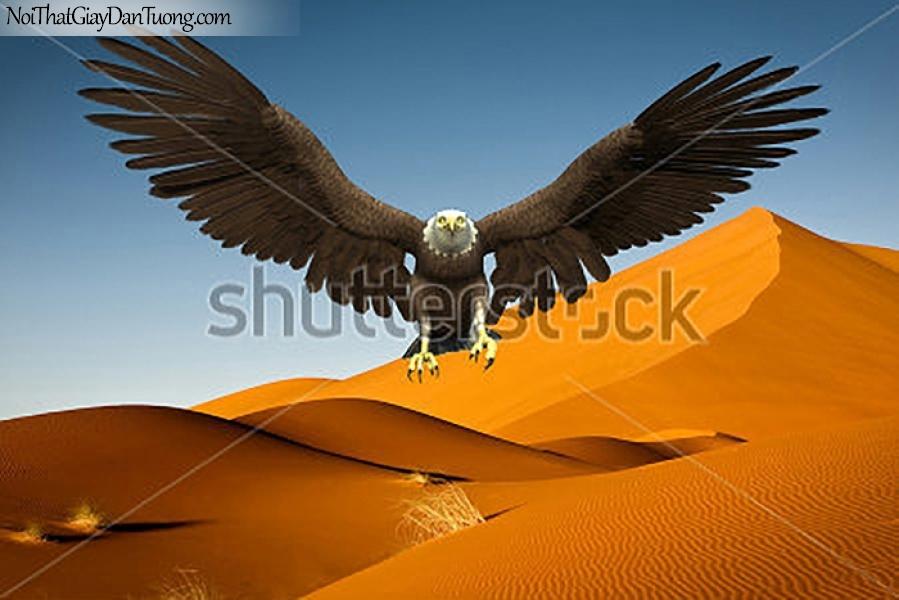 Tranh dán tường , ngắm chim đại bàng trên đồi sa mạc DA363