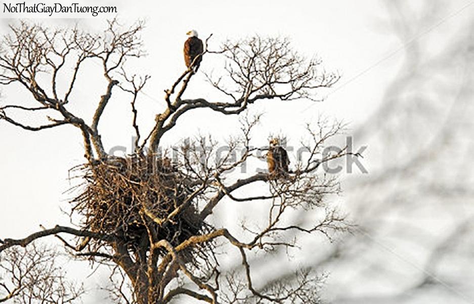 Tranh dán tường , ngắm chim đậu trên cây khô và tổ chim DA368