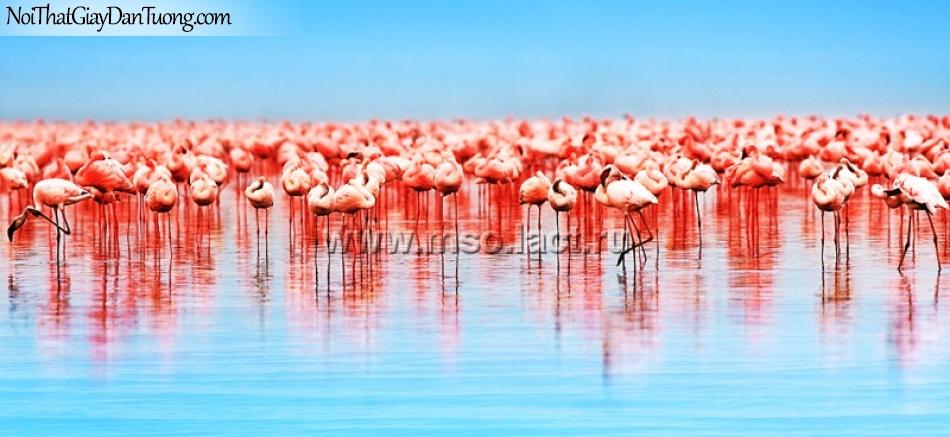 Tranh dán tường , ngắm đàn cò ơ dưới nước 1 màu hồng hồng DA376