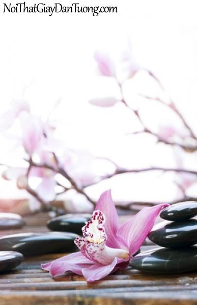 Tranh dán tường | Bức tranh những viên đá nhỏ được xếp xinh xắn bên bông hoa lan DA2173