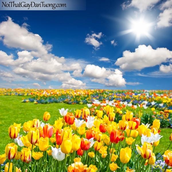 Tranh dán tường | cánh đồng hoa tuy líp dưới ánh mặt trời DA2205