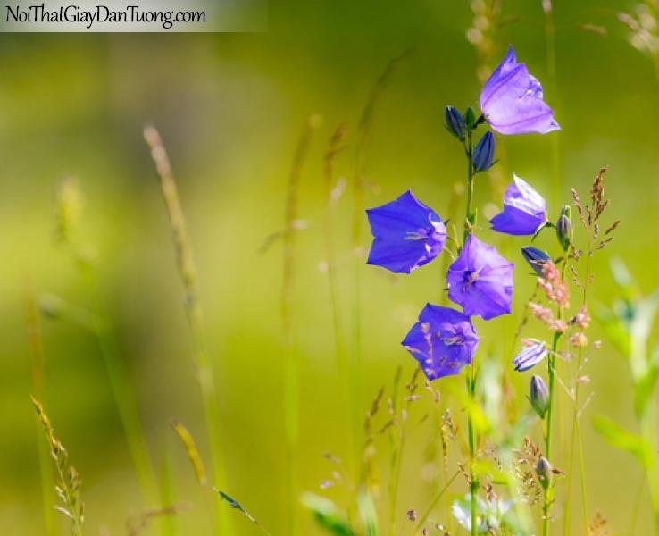 Tranh dán tường | Bức tranh tuyệt đẹp, bông hoa tím giữa bãi cỏ xanh DA2247